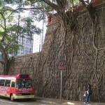 A természet utat tör magának – szokatlan helyeken növő fák