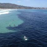 Ritka jelenség – óriási halraj tűnt fel San Diego partjainál
