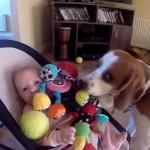 Így kér bocsánatot a kutyus a kisbabától, amiért elvette játékát