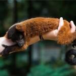 Vörös varik születtek a Nyíregyházi Állatparkban