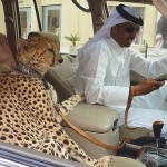 Photo: Szokatlan dolgok, amivel csak Dubaiban találkozhatunk
