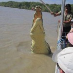 Cápát zsákmányolt egy hatalmas krokodil Ausztráliában