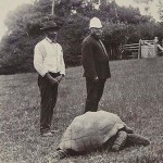 Jonathan, a világ egyik legöregebb teknőse az 1900-as évek elején és napjainkban