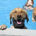 Photo: Ilyen amikor a kutyák medencés bulit tartanak