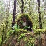 25 éve él az esőerdőben egy amerikai férfi