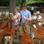 Nara, a szarvasok és templomok városa