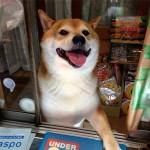 Egy barátságos kutya fogadja a vevőket egy japán boltban