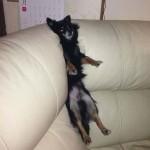Photo: Kutyák és macskák a bútorok fogságában