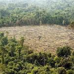 Ismét növekszik az amazonasi esőerdők irtása Brazíliában
