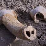 Jégkori ősbölény maradványait találták meg Szegeden