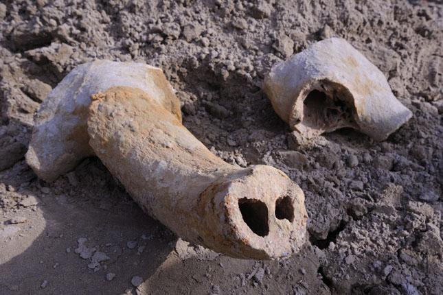 Jégkori õsbölény maradványait találták meg Szegeden