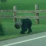 Vödörbe szorult medvét mentettek meg Amerikában