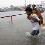 Állatok, akik önzetlen embereknek köszönhetően menekültek meg