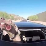 A kutya, aki imádja a pofazacskóját lobogtatni a szélben [Videó]