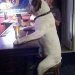 Emberi módon viselkedő kutyák