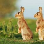 Mint két tojás – aranyos állatpárok