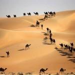 35 csodálatos fotó hatalmas állatcsoportokról