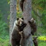 Szívmelengető képek aranyos állatcsaládokról