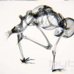 Photo: Jóga a röntgen alatt - így mozognak csontjaink
