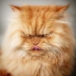 Grafi, a morcos macska