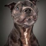 Megható fotósorozat idős kutyákról