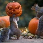 Aranyos képek töklámpásokkal játszó mókusokról