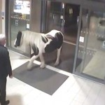 Photo: Egy szökött póni sétált be a rendőrségre