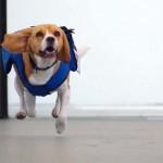 Reklámfogás a holland légitársaság elveszett tárgyakat kereső kutyája