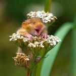Aranyos egerek a vadonból