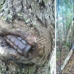 II. világháborús felszereléseket nyelnek el a fák Oroszországban