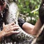 Egészben nyeli le egy anakonda a Discovery riporterét