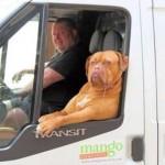Photo: Kutyák munka közben