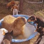 Photo: Különleges barátságok egy állatmenhelyen