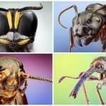 80 elképesztő makrófotó apró rovarokról