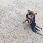 Megmentőre talált a magára hagyott, lebénult kutya