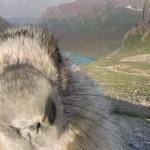 Mormota zavart meg egy filmforgatást [Videó]