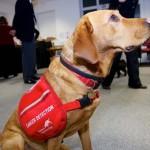 Több száz életet mentett meg a kutya, aki kiszagolja a daganatokat