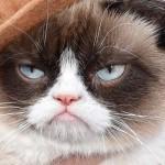 25 milliárd forintot hozott gazdájának Grumpy Cat, a zsémbes macska