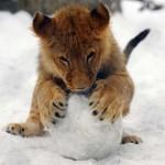 Állatok, akik önfeledten játszanak a hóban