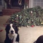 Kutyák és macskák a karácsony ellen