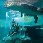 Merülés a hatalmas krokodilok közé