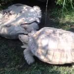 Photo: Így állította talpra a barátját a teknős