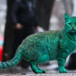 Zöld macska tűnt fel Bulgáriában