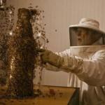 Így nyomtatott 80 ezer méh egy whiskey-s üveget