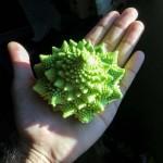 Pagodakarfiol – egy különleges formájú zöldség