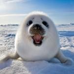 Bámulatos fotók az Északi-sarkvidék legszebb állatairól
