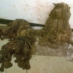 Photo: Döbbenetesen elhanyagolt kutyákat mentettek meg állatvédők