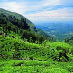 Srí Lanka varázslatos világa egy három perces élménybeszámoló videón keresztül