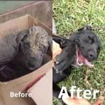 Állatok az örökbefogadásuk előtt és után