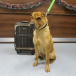 Egy vasútállomáson hagyta gazdája a kutyáját, holmiját egy bőröndbe tette